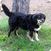 Adopt A Pet :: Elsie - Malakoff, TX