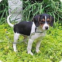 Adopt A Pet :: JETHRO - Hartford, CT