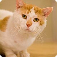 Domestic Shorthair Cat for adoption in Grayslake, Illinois - Dane