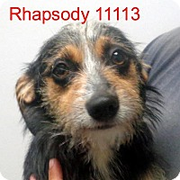 Adopt A Pet :: Rhapsody - baltimore, MD