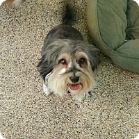 Adopt A Pet :: Oliver - Thousand Oaks, CA