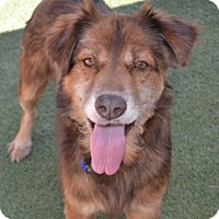 Adopt A Pet :: Sam - Scottsdale, AZ