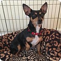 Adopt A Pet :: Gabby - Topeka, KS