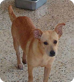 Terrier (Unknown Type, Medium) Mix Dog for adoption in Hillside, Illinois - Paco