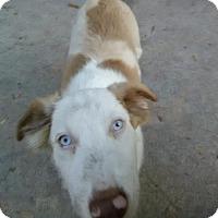 Adopt A Pet :: Lady Sif East Orlando Petco - Orlando, FL