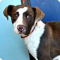 Adopt A Pet :: Quinn - Sunnyvale, CA