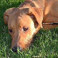 Adopt A Pet :: Karol - Phoenix, AZ