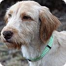 Adopt A Pet :: Flynn