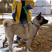 Adopt A Pet :: Saki - East Amherst, NY