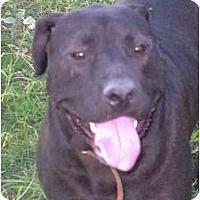 Adopt A Pet :: Pasha - Sacramento, CA