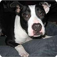 Adopt A Pet :: Duckie - Reisterstown, MD