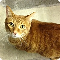 Adopt A Pet :: Topaz - Byron Center, MI