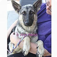 Adopt A Pet :: Seven 1698/24 - Madera, CA