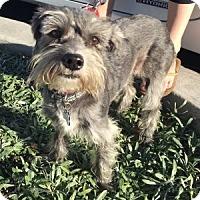 Adopt A Pet :: Maddie - Redondo Beach, CA
