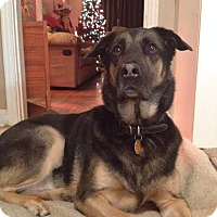 Adopt A Pet :: Trace - Caledon, ON