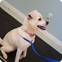 Adopt A Pet :: Angel - Rocky Mount, NC