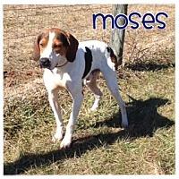 Adopt A Pet :: Moses - Courtesy Listing - Wilmington, DE
