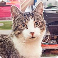 Adopt A Pet :: Mr. Fools - Albany, NY