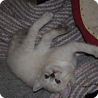 Adopt A Pet :: Deaux - Hurst, TX