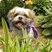 Adopt A Pet :: Kiko - Princeton, KY