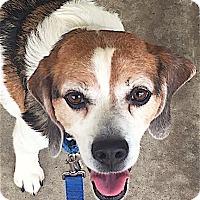 Adopt A Pet :: Coop - Houston, TX