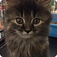 Adopt A Pet :: Matina - Ortonville, MI