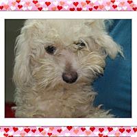 Adopt A Pet :: QTip - S. TX - Tulsa, OK
