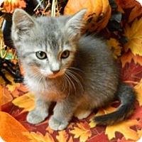 Adopt A Pet :: Olivia - Columbus, NE