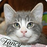 Adopt A Pet :: C.J. - Irvine, CA