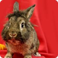 Adopt A Pet :: Mufasa - Voorhees, NJ