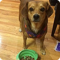 Adopt A Pet :: Poppie: Adoption Pending - Verona, NJ