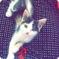 Adopt A Pet :: Tabitha - Mission Viejo, CA