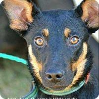 Adopt A Pet :: Niles - Coopersburg, PA