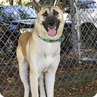 German Shepherd Dog Dog for adoption in Baton Rouge, Louisiana - Vada
