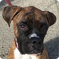 Adopt A Pet :: Davidson - Canoga Park, CA