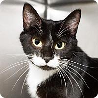 Adopt A Pet :: Daria - Seville, OH