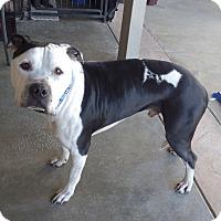 Adopt A Pet :: Chubs - Quail Valley, CA