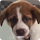 Adopt A Pet :: JOSEPHINE