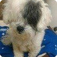 Adopt A Pet :: RILEY - Hampton, VA