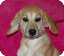 Labrador Retriever Mix Dog for adoption in Phillips, Wisconsin - Dakota