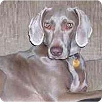 Adopt A Pet :: Ava - Attica, NY
