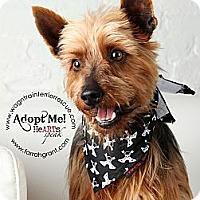 Adopt A Pet :: Scott - Omaha, NE