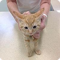 Adopt A Pet :: Rusty - Ft. Lauderdale, FL