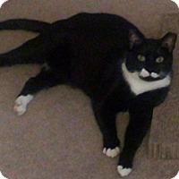 Adopt A Pet :: Mao - Springfield, PA