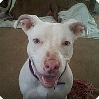 Adopt A Pet :: Lilah.see her smile - Sacramento, CA