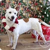 Adopt A Pet :: Titan - El Campo, TX