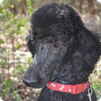 Adopt A Pet :: BAILEY - Elk River, MN