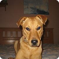 Adopt A Pet :: Victor - San Antonio, TX