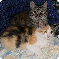 Adopt A Pet :: (sisters) Mischief and Mayhem - Witter, AR