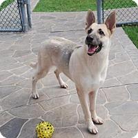 Adopt A Pet :: Nina - Pompano Beach, FL